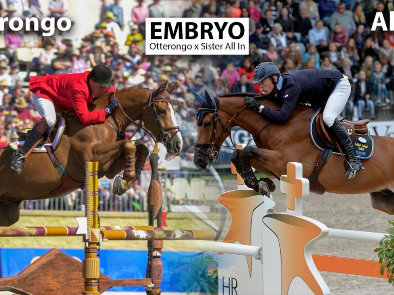 Ludo Philippaerts buys embryo from sister H&M All In on embryoauction