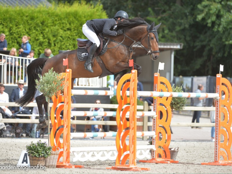 Cristel M and Exquise du Pachis clear in GP CSI2* Lier.