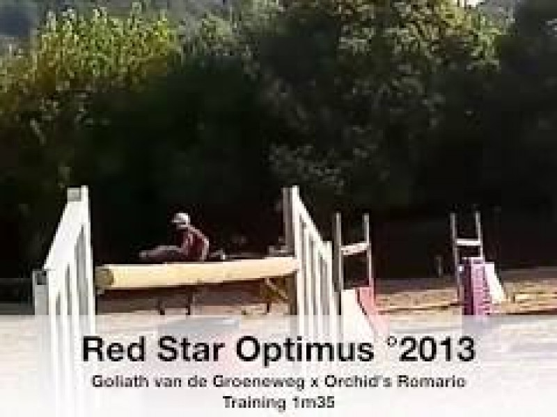 SBS approves Red Star Optimus (Goliath van de Groeneweg x Orchid's Romario)