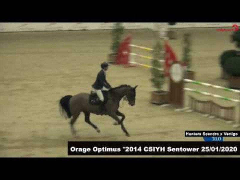 Orage Optimus wins final CSIYH 6yo