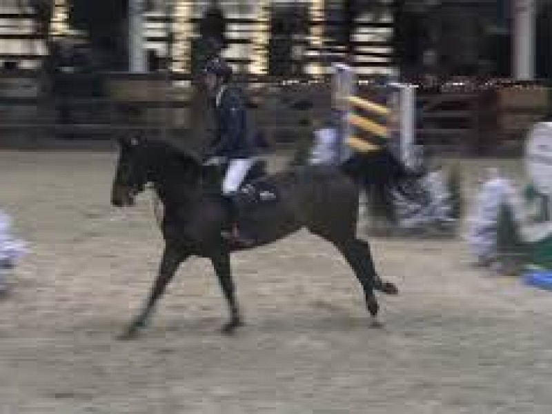 Cristel M 5th on Gold Azelhof