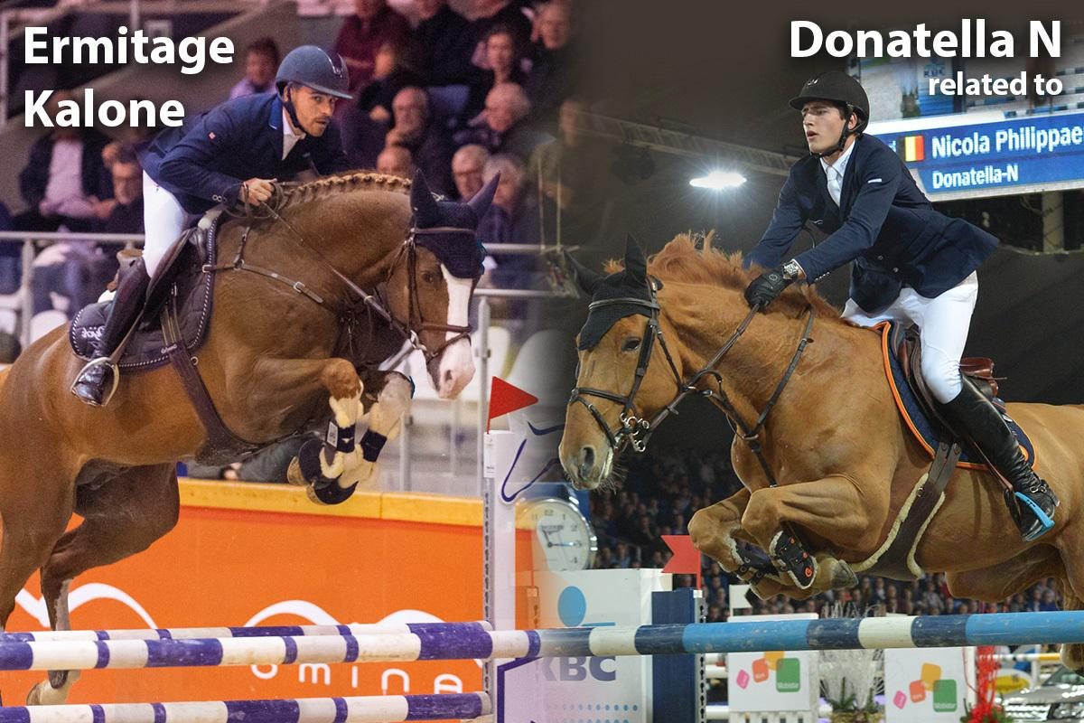 paard-ermitage-kalone-x-related-donatella-n-121245.jpg